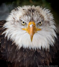 Makes you speechless... When was the last time you were eye to eye with an eagle?
