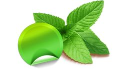 and and mint the the of the of Health And Beauty, Plant Leaves, Lose Weight, Weight Loss, Mint, Luxembourg, Vitamins And Minerals, Losing Weight, Weigh Loss