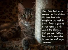Let us learn from the eternal wisdom of a young cat… Happy New Year All!  http://zeezoey.com/blog/moving-into-the-new-year-and-taking-lessons-from-our-cats-along-the-way/