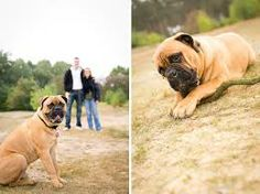 hondenfotografie op locatie - Google zoeken