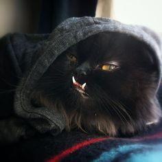 PRINCESS MONSTER TRUCK. - Holistic Pet Coverage is Included! http://shrsl.com/?~7hbk #cat