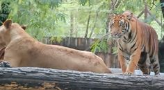 Safari World Day Tour with Marine Park - Bangkok 1100bh