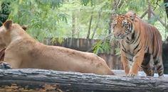 Safari World Day Tour with Marine Park - Bangkok 1100bh