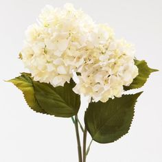 $11.98 One of my favorite discoveries at WorldMarket.com: Cream Hydrangeas, Set of 2