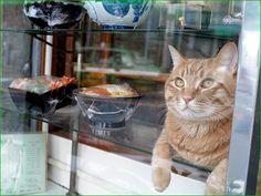 蕎麦屋のショーケースに猫♡ 『いぬのきもち・ねこのきもち』より
