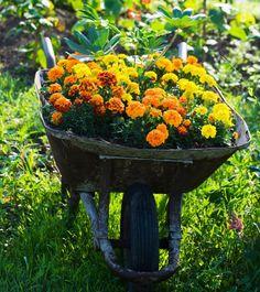Schubkarre bepflanzen- kreative Gartenidee für Gartendeko
