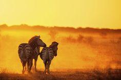 Namibia - Zebras und andere Tiere auf einer Safari beobachten
