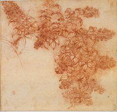 Leonardo da Vinci Between Art and Science | Lusheck