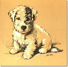 Portrait Of A Sealyham Puppy Antique Print By Lucy Dawson
