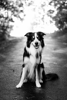 I've always wanted a Border Collie. I think they are the coolest dogs ever.