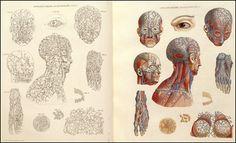 Aula de Anatomia | História da Anatomia