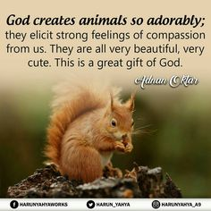 God creates animals so adorably they elicit strong feelings of compassion from us. They are all very beautiful, very cute. This is a great gift of God. Strong Feelings, Water Art, Kind Words, Compassion, Photo Art, Great Gifts, Religion, God, Carpentry