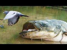 top 10 des plus gros poissons du monde - YouTube