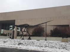 What is MOR? The Museum of the Rockies. It's located in Bozeman, MT and worth a little trip to see Big Mike and the Siebel Dinosaur Complex.
