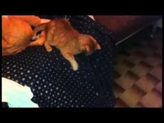 Maia&Gaspare - HIDE AND SEEK :-D - YouTube