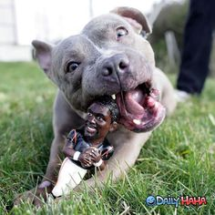Vick chew toy. I'm sorry this is funny!!!