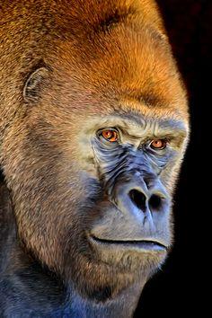 art + brown | Endangered mountain gorillas. ALL about gorrilas. Rwanda safari.