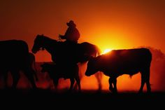 my main aim in life is to live to tell the tale of working on an Australian cattle ranch. Cattle Drive, Australia Travel Guide, Ranch Life, Gif Animé, Travel Alone, South Australia, The Ranch, Country Life, Trip Planning