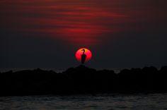 Grey Heron at Sunset, Maldives by Justin Sneddon, via 500px