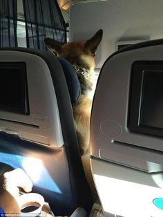 Animals e noi: Cani al sicuro in aereo, mai più in stiva ma in cabina come è giusto che sia