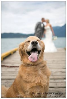 My friends got married last summer. Theyre dog was just as happy for them as the humans attending.