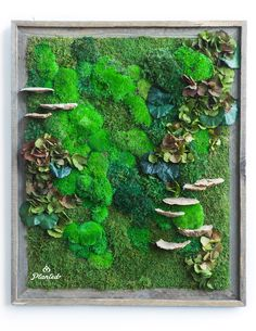 Our Moss Plant Paintings don't require sun or water. The owner's effort should be put toward enjoying it as art, not maintenance. You won't find harmful additives or need costly equipment, just a place for a hammer and a nail. This poster-size beauty is up on our Etsy page! #PlantedDesign #MossWall #MossWalls #Moss #MaintenanceFreeMoss #CustomMossWall #CustomDesign #CustomMoss #PlantBrand #MossBoss #PlantArt #PreservedPlants #PlantLady #PlantPower #GoGreen #EtsySeller #Etsy #EtsySeller