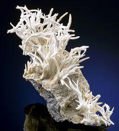 Beautiful specimen of Aragonite var. Flos Ferri on matrix! Eisenerz, Styria, Austria- / Mineral Friends <3