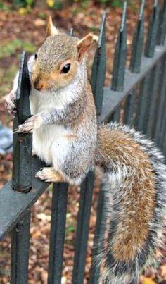 Squirrel in Hyde Park!
