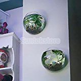 Hanging Glass Flower Planter Vase Terrarium Container Home Garden Ball Decor 10 cm It helps beautify and purify your house or office, a good decoration for youA Hanging Plant Wall, Hanging Flower Baskets, Hanging Vases, Wall Vases, Wall Planters, Planter Pots, Glass Flower Vases, Clear Glass Vases, Flower Planters