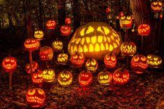Louisville, KentuckyOct. 9 - Nov. 2Around 5,000 lit pumpkins line a walking trail for a mystical str... - Courtesy of Jack-O'-Lantern Spectacular