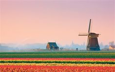 Dutch landscape. #greetingsfromnl