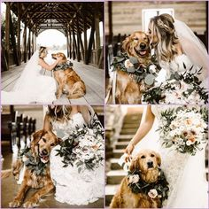 Pawstruck Press Everything there is to know about dogs! is part of Dog wedding pictures - The best in dog articles, photos, and videos brought to you buy your friends at Pawstruck com Visit us today! Wedding Goals, Wedding Pictures, Wedding Planning, Dog Engagement Pictures, Rustic Wedding Photos, Perfect Wedding, Dream Wedding, Wedding Day, Dog Wedding Attire