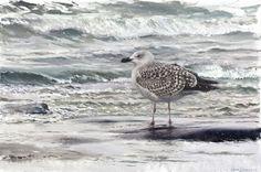 By The Sea - Lars Jonsson - oil Watercolor Bird, Wildlife Art, Bird Art, Bird Feathers, Beautiful Birds, Animal Drawings, Oil, Board, Artwork