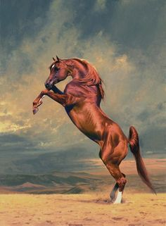 Peter Smith-Arabian horses. Talk to LiveInternet - Russian Service Online Diaries