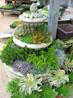Cottage Gardens, Petaluma, Ca