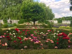 The Glorious Roses this Summer, blog by Carolyne Roehm | Carolyne Roehm