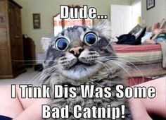 bad catnip