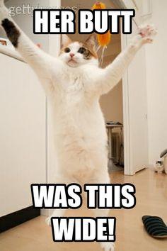 #Cat #Meme #CrazyCat