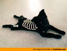 Disfraz de esqueleto para tu perro para Halloween.