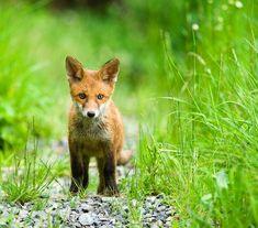 Wild Animals, Baby Animals, Little Fox, Big Cats, Deer, Kindergarten, Pastel, Puppies, Amazing