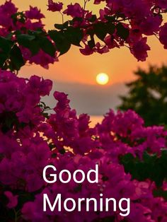 find latest good morning images , good morning quotes & good morning & good morning quotes for him & good morning quotes inspirational & good mornin Good Morning Beautiful Pictures, Latest Good Morning Images, Good Morning Images Flowers, Good Morning Inspiration, Good Morning Picture, Good Morning Tuesday, Good Morning Happy, Good Morning Greetings, Good Morning Massage