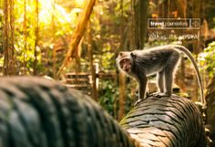 #BackToSchool Special BALI  Beautiful Bali, the perfect spot for a summer family adventure. Spend 6 nights on the gorgeous beach of the Grand Hyatt Bali 🏖️ before heading off to Ubud for rainforest and terraced rice paddies and monkeys of course.🐒  €1425 per person departing in July including breakfast, flights & transfers. Flexible Promise Included. Conditions apply.  As always other dates dates available. Price based on family of 4. Drop me a line for other options or more information!😇 Family Of 4, Grand Hyatt, Family Adventure, Ubud, Monkeys, Dates, Back To School, Bali, How To Apply