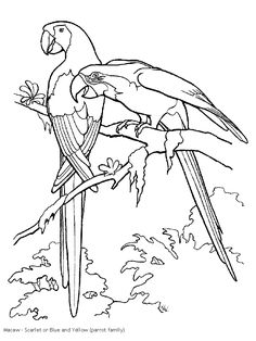 tucan outline | Rain Forest Coloring pages K-3 Coloring Sevierville Tennessee