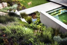 Landscaping Bridle Road Residence  residence greenery