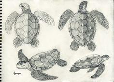 Scientific Illustration | toothanddraw: Loggerhead sea turtles