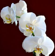 My favorite flower...Orchid. They represent love, luxury, beauty and strength.