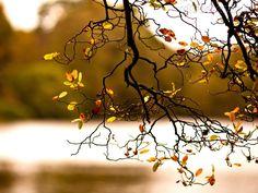 O que é belo?  Uma árvore em flor fica despida no outono.  A beleza transforma-se em feiura,  A juventude transforma-se em velhice  E o erro transforma-se em virtude.  Nada fica sempre igual e nada existe realmente.  Portanto as aparências e o vazio existem simultaneamente.   Dalai Lama
