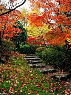 beautiful fall setting reminds me of my Kirkwood home... when my life was right