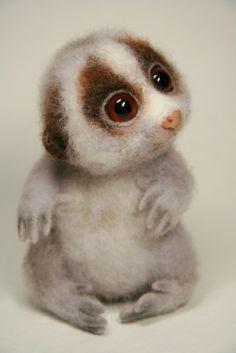 1000+ images about ZOO loris maki lemur on Pinterest