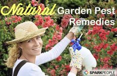 Natural Methods for Deterring Garden Pests (without Any Chemicals) | via @SparkPeople
